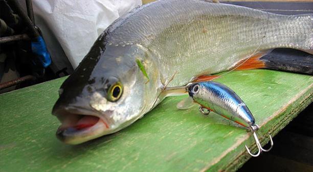 Риболовля на Десні